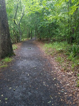 Landsford Canal State Park: Beautiful hike and we spotted a lot of trees & plants that I'd never seen before in SC!