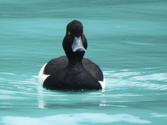 Lago di Barcis : Birdwatching