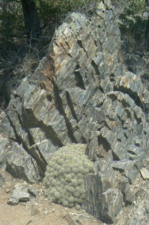 The Highlands Center for Natural History: Rock and Cactus combination on Stretch Pebble Trail