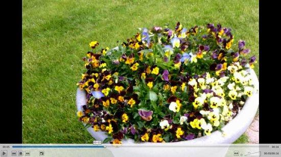 Erie Basin Marina: Flowering Bloom Pot