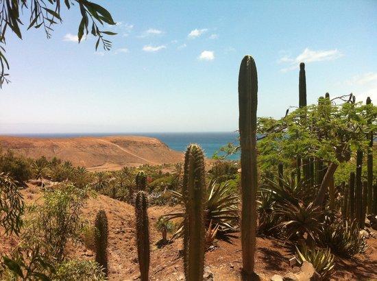 Oasis Park Fuerteventura: Amazing views on walk to birds of prey