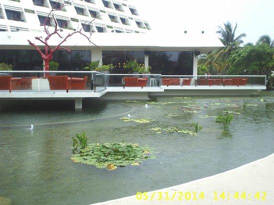 Grand Oasis Cancun: UN LAGO CON LIRIOS Y EL RESTAURANT VIP EXQUISITOS PLATILLOS DE GOURMET