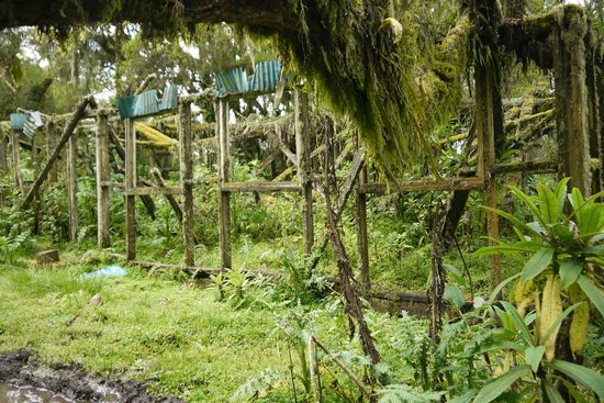 Karisoke Research Center - Dian Fossey Camp