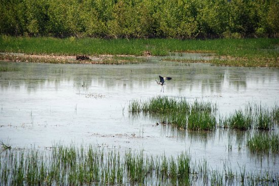 Shiawassee National Wildlife Refuge: Be ready for Action