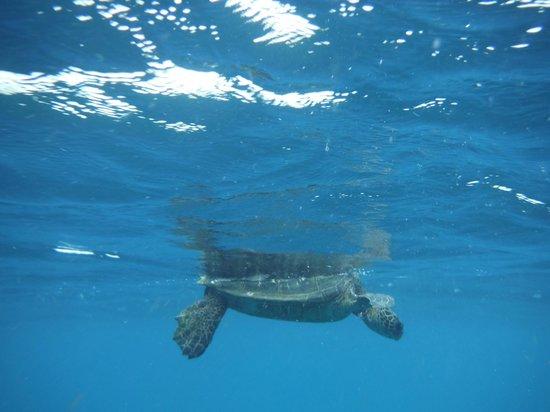 Z Tourz : Turtle from Turtle City