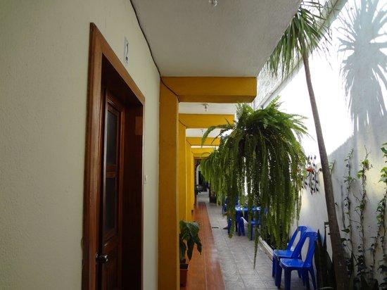Hostal Antigua: small garden outside all rooms