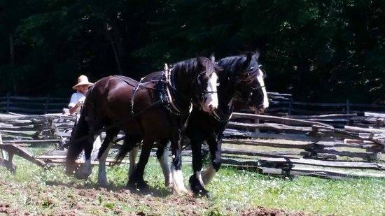 George Washington's Mount Vernon: Shires