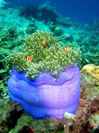 Tunku Abdul Rahman Marine Park: finding nemo!!