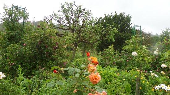 Maison et jardins de Claude Monet : jardín