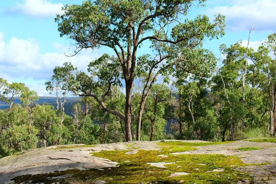 Natures Paradise : Moss rock on hill overlooking CY O'Connor Lake (which Mundaring Weir is on)