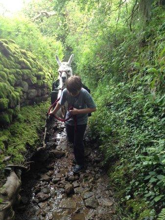 Nidderdale Llamas: Mixed terraine