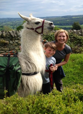 Nidderdale Llamas: Great views with Noodle