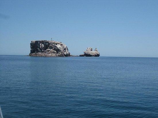 Isla Espiritu Santo: Isla de Los Lobos Marinhos?