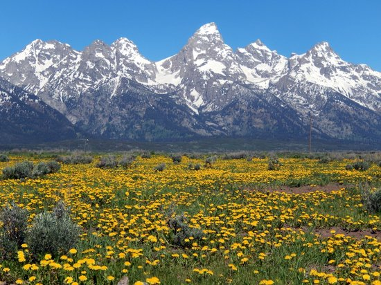 BrushBuck Wildlife Tours: Spectacular spring scenery in the Grand Tetons!