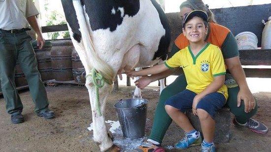 Taua Resort Caete : Ordenhando a vaca