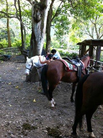 Waipio Na'alapa Trail: 乗ります