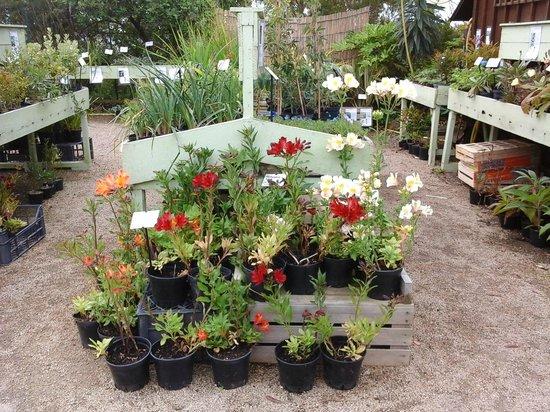 Foto de jardin exotique et botanique de roscoff roscoff for Vente de plantes