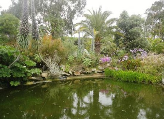 Bassin poissons foto de jardin exotique et botanique de for Bassin poisson jardin