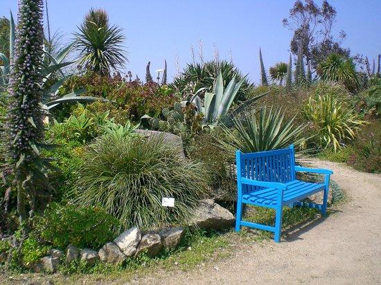Protea photo de jardin exotique et botanique de roscoff - Photo jardin exotique ...