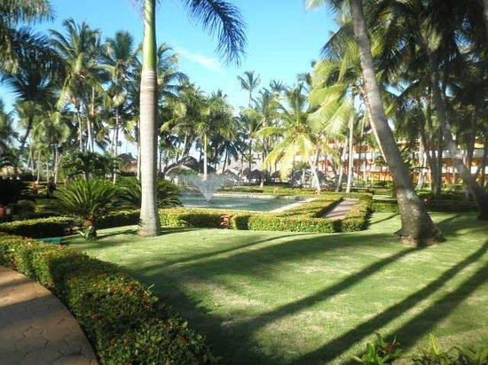 Iberostar Punta Cana: las palmeras y el jardin