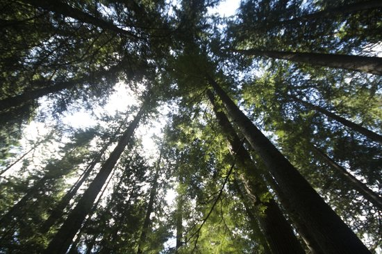 The Grouse Grind: nella foresta
