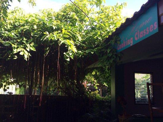 Pat's Thai Cooking School: Great garden