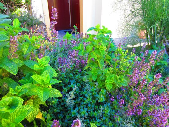 Villa Del Lago: Herbs in the garden