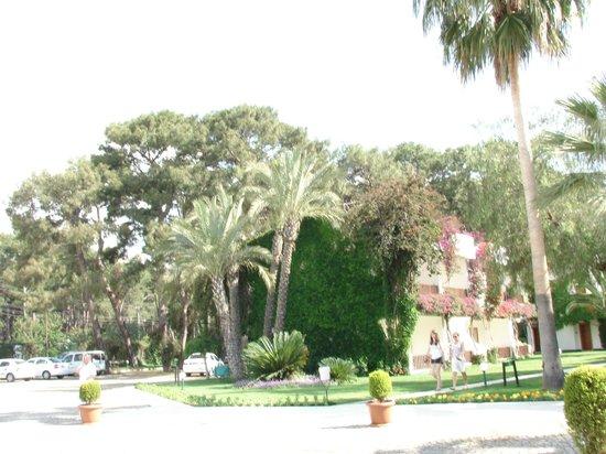 Club Boran Mare Beach: Территория отеля