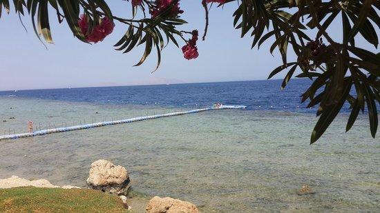 Royal Grand Sharm Hotel: Lovely scenes