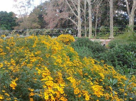 Adelaide Botanic Garden: Winter Colour of Mexican Garden