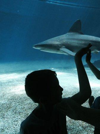 Acquario di Genova : Lo squalo
