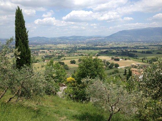 Il Poggio degli Olivi: Vista magnifica dalla camera