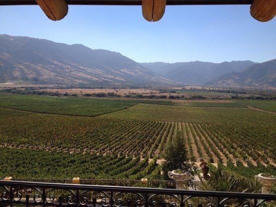 Colchagua Museum: Vista de la Viña