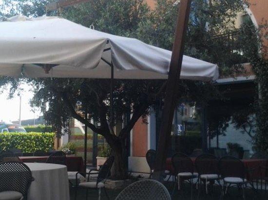 Hotel Villa Altura: oliveto