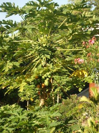 Villas de Jardin: Papaya