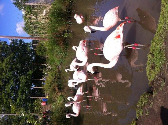 Wingham Wildlife Park: Fabulous flamingoes
