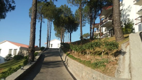 Moksha Himalaya Spa Resort: Walk Way