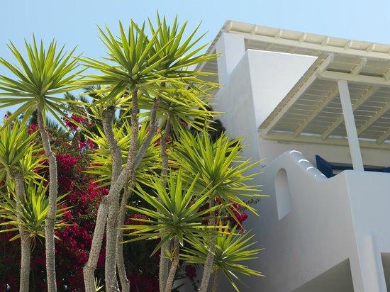 Aloni Hotel: garden view