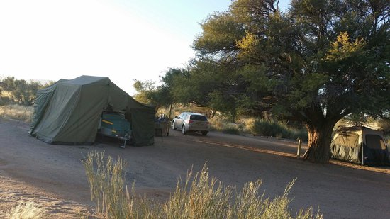 Canyon Roadhouse: Campsite with beautiful tree