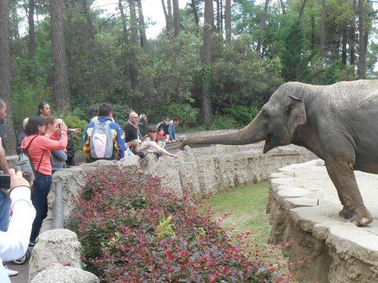 Zoo de la Palmyre : Close up to the elephant