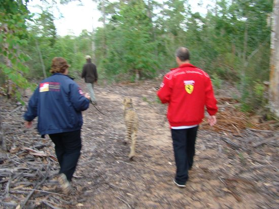 Tenikwa Wildlife Awareness Centre: maria & bazil with Thandi