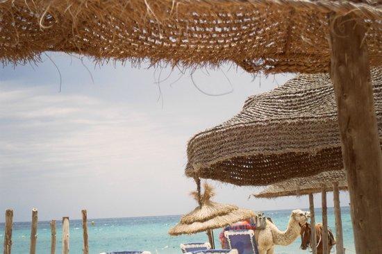 Samira Club: beach