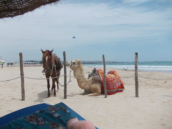 Samira Club: horse ,camel having a break