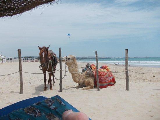 Samira Club : horse ,camel having a break