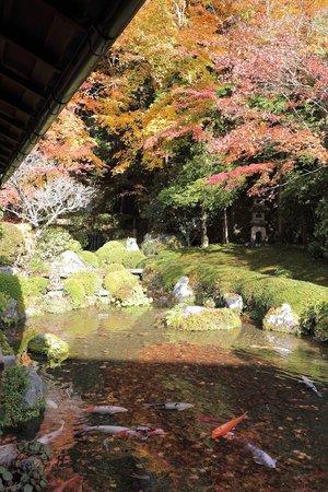 Jakkoin: 四方正面の池
