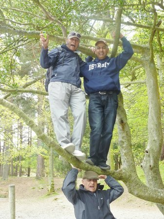 Thirlmere in the Lake District: Free tree climbing at Keswick