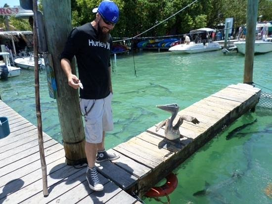Hungry Tarpon : the pelican was following he around forever