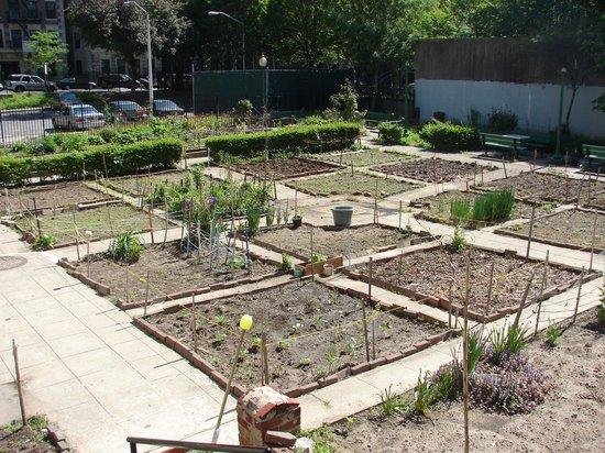 Harlem Renaissance House B&B: Vegetable plots on 139th Street, Harlem