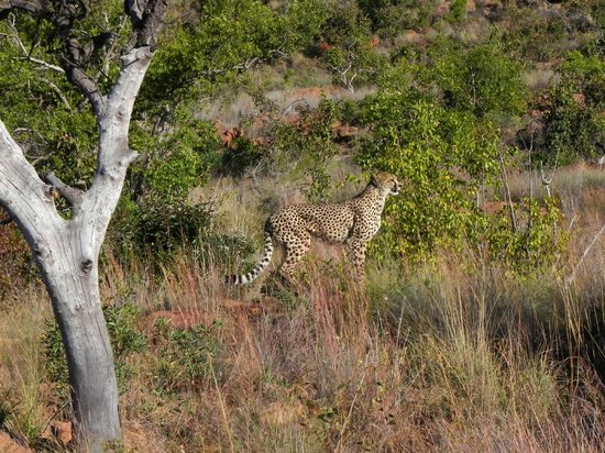 Kololo Game Reserve: Indrukwekkend