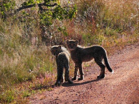 Kololo Game Reserve: Snoezig